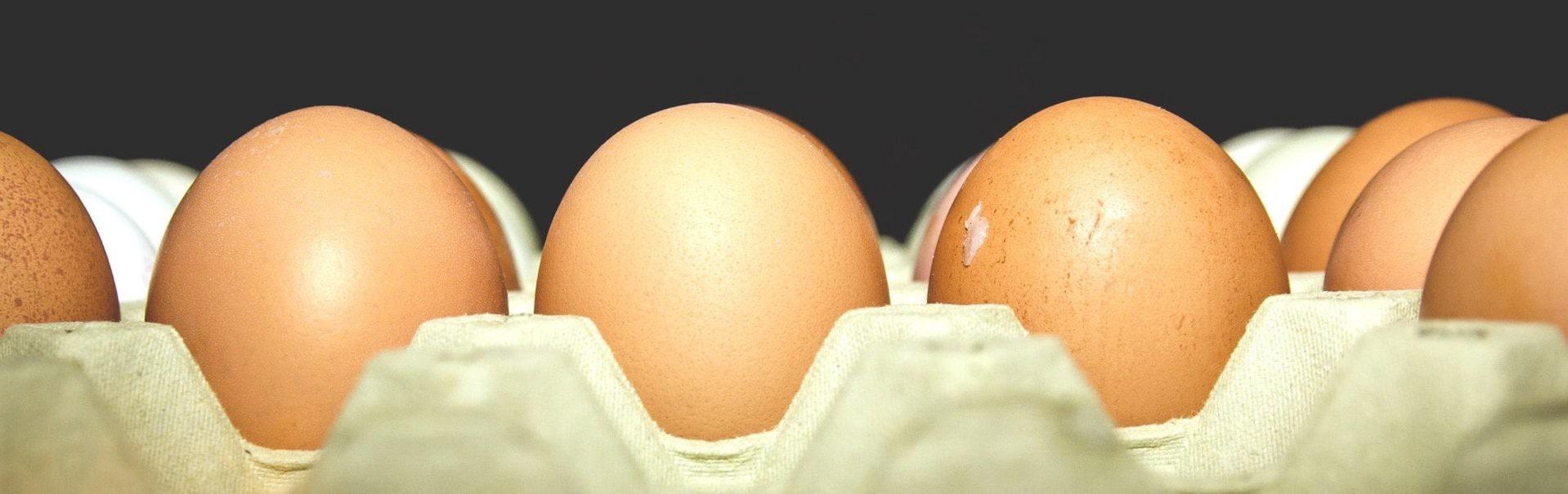 the eggsercise scandiweb